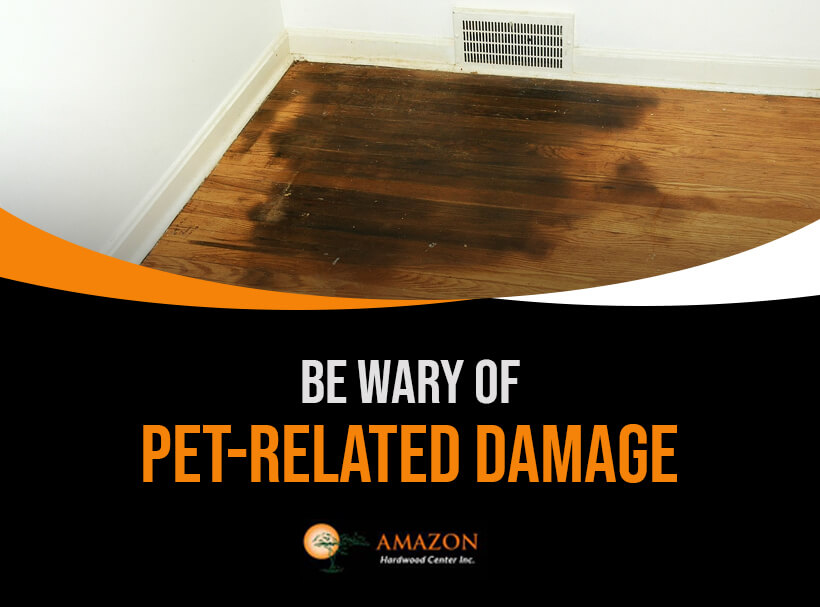 Pet related Damage on Hardwood Flooring